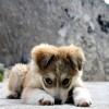 Θέλω να αγοράσω σκύλο – Τι να προσέξω
