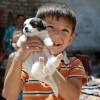 Κατοικίδια Ζώα: Οφέλη σε παιδιά και ηλικιωμένους