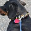 Περιλαιμια σκυλων – Πως να επιλέξετε