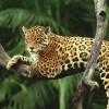 Ζώα υπό εξαφάνιση – Απειλούμενα είδη