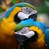 Παπαγάλοι και Παπαγαλάκια – Πως να φροντίσετε τον παπαγάλο σας