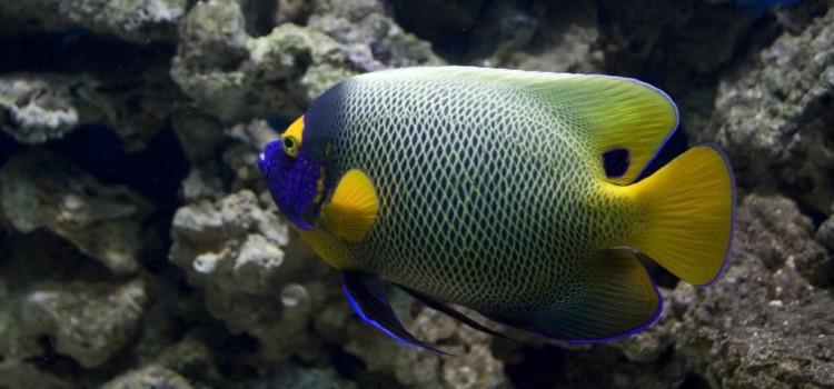 Τροπικά ψάρια για ενυδρείο