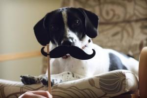 αγορα-σκυλου