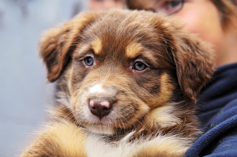 κατοικίδια-ζώα-1-σκυλιά