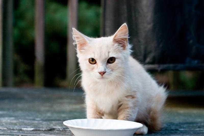 κατοικίδια-ζώα-2-γάτες