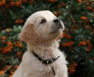 ονοματα-σκυλων