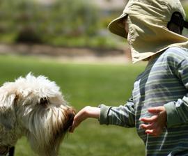 προσεγγίσετε-σκυλο