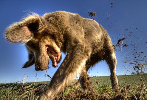 σκύλος-σκάψιμο