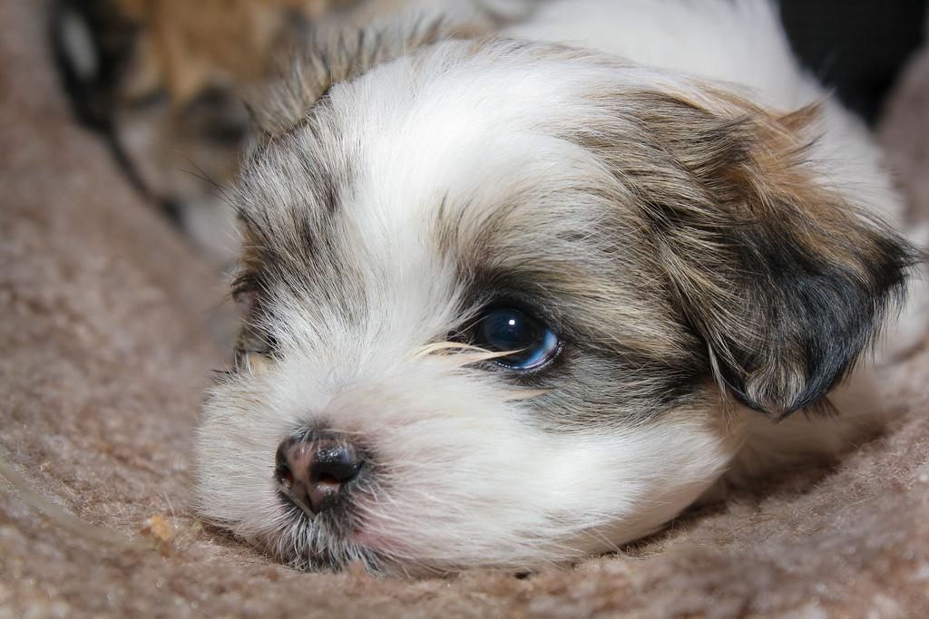 διαμερισμα-σκυλια