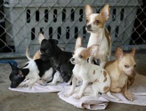 μικρά-σκυλιά