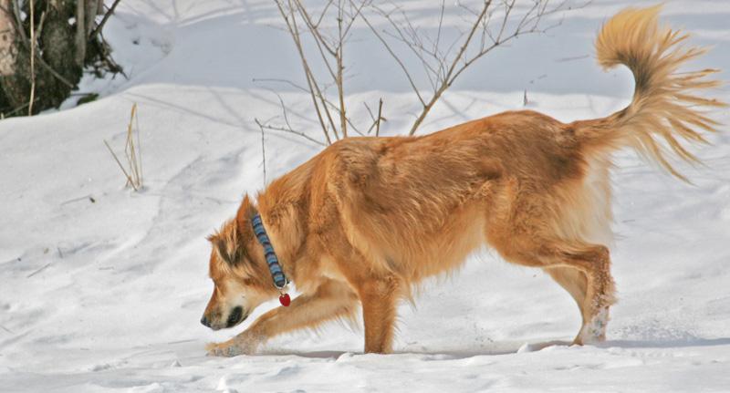περιλαιμια-σκυλων-1