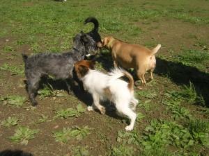 ρατσες-μικροσωμων-σκυλιων