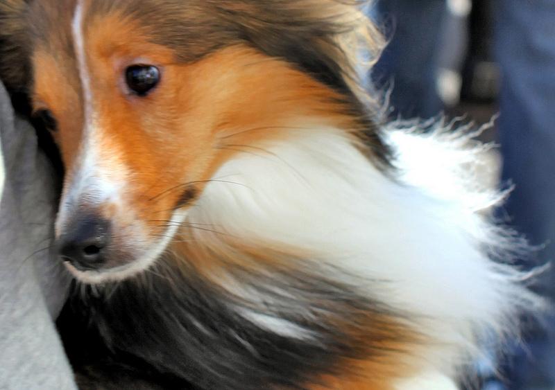 σκυλια-κολει