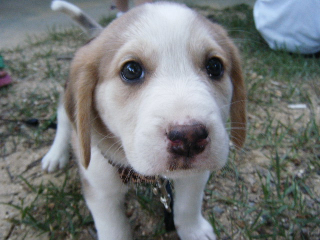 υιοθεσία-σκύλου