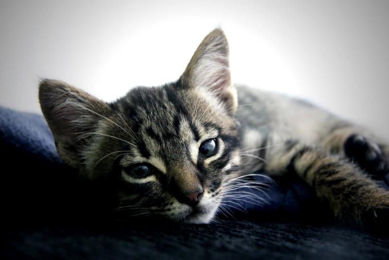 φροντιδα-γατας-1