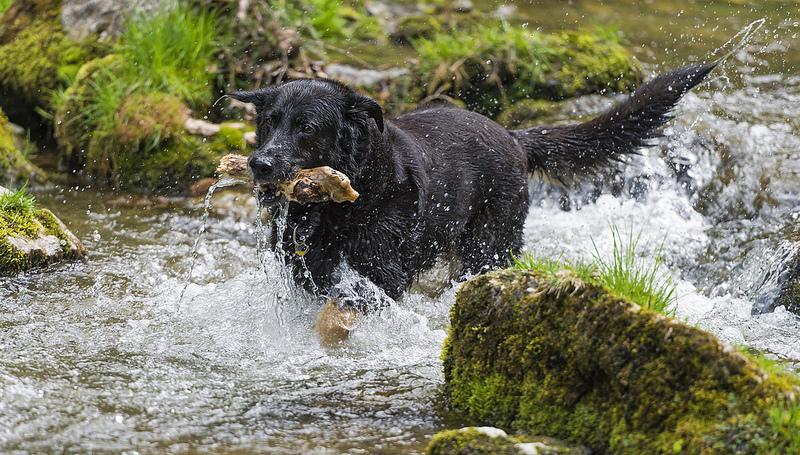 εκτροφεία-σκύλων-1