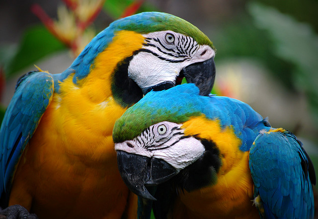 παπαγάλοι-παπαγαλάκια-2