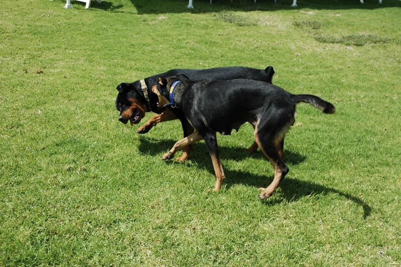 ξενοδοχειο-σκυλων-1
