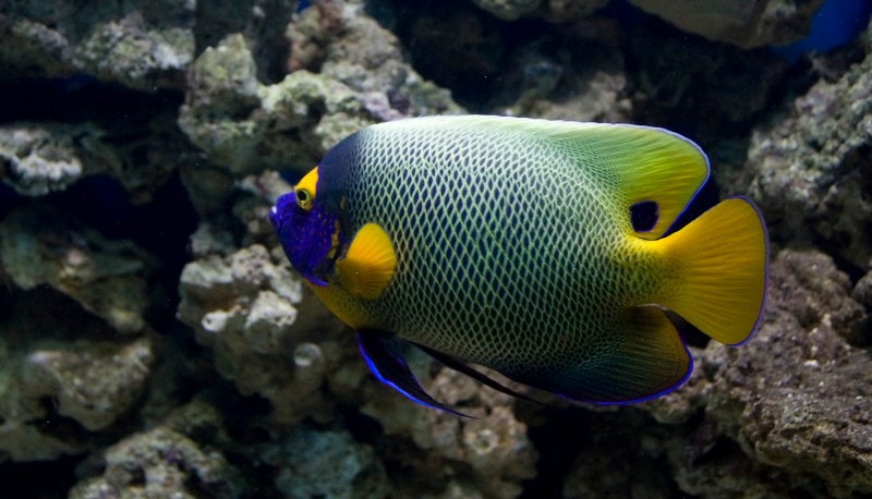 τροπικα-ψάρια-ενυδρείο-1