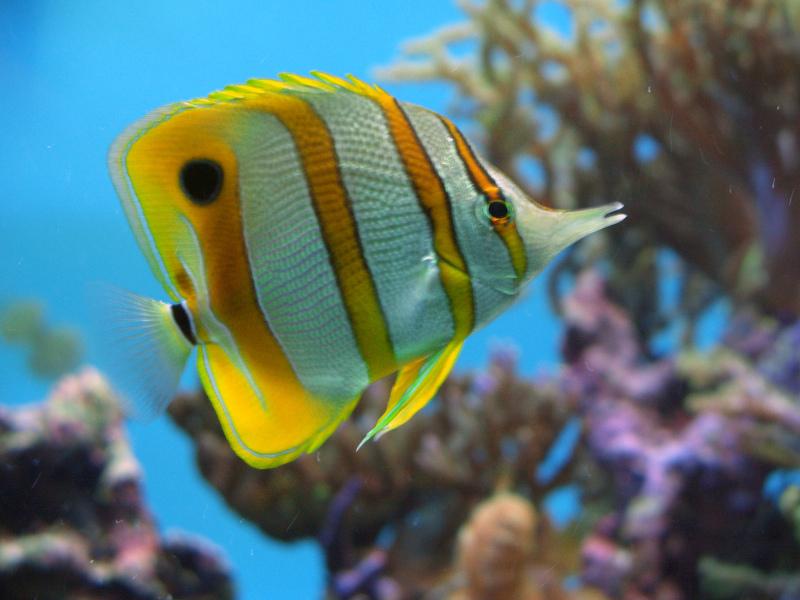 τροπικα-ψάρια-ενυδρείο-2