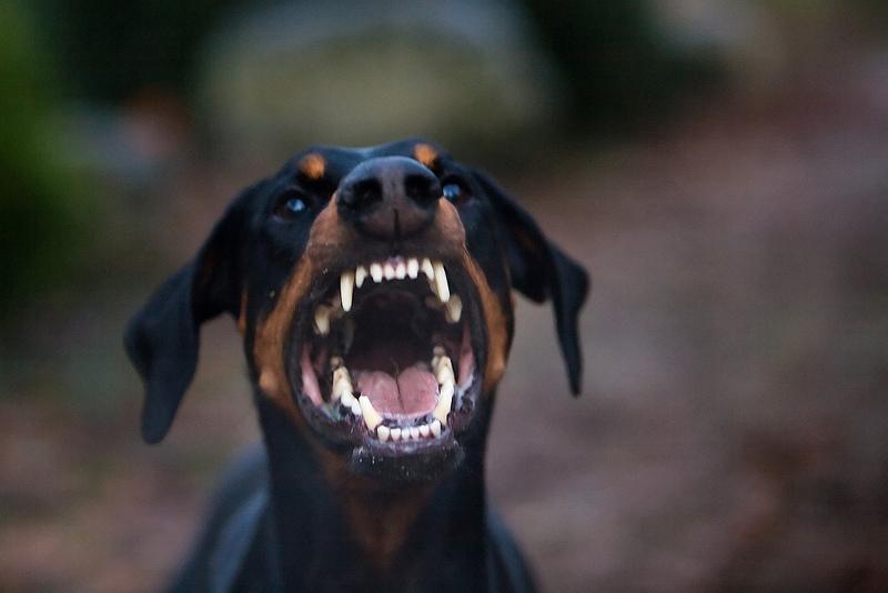 επικίνδυνα-σκυλιά-1